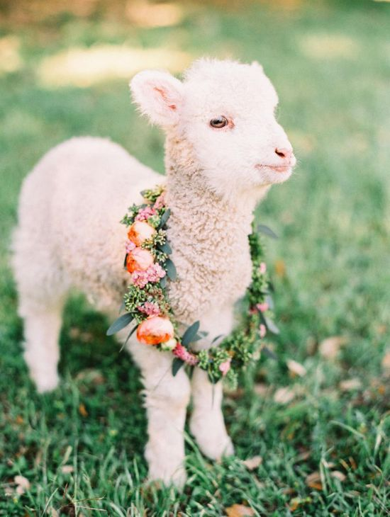 Spring Wedding Theme Idea With Fluffy Friends